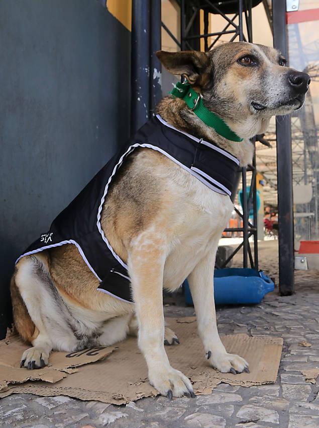 Cães ganham capinha em Curitiba