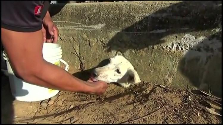Nikki ficou presa em um buraco enquanto buscava comida; clique para ver o vídeo (Crédito: BBC)