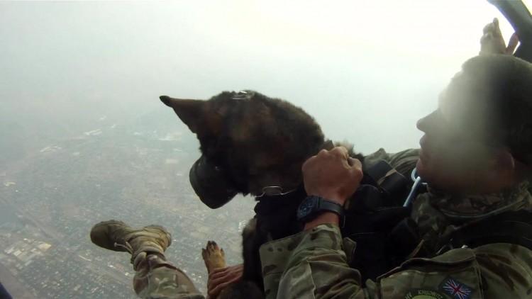 Cão 'paraquedista' durante treinamento; clique para assistir ao vídeo da BBC
