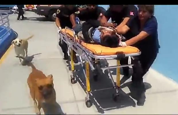 Cães acompanham homem até hospital; clique para assistir ao vídeo (Foto: Reprodução/vídeo)