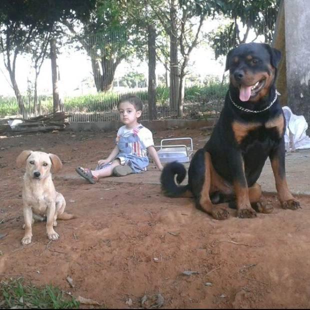 Enzo e o rottweiler Quiron