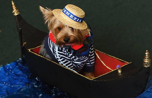 Cachorro fantasiado de gondoleiro participa de concurso em San Salvador