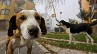 Cães; vira-lata é preferido do brasileiro, diz pesquisa