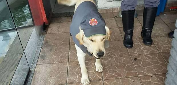Speedy, o laborador mascote dos bombeiros em Santo André