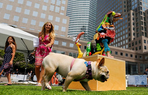 Cães e tutores em exposição voltada para os animais, em Nova York