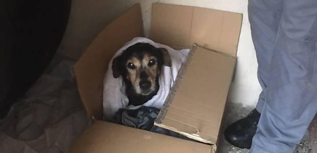 Cão resgatado pelos Bombeiros no córrego Aricanduva, em SP
