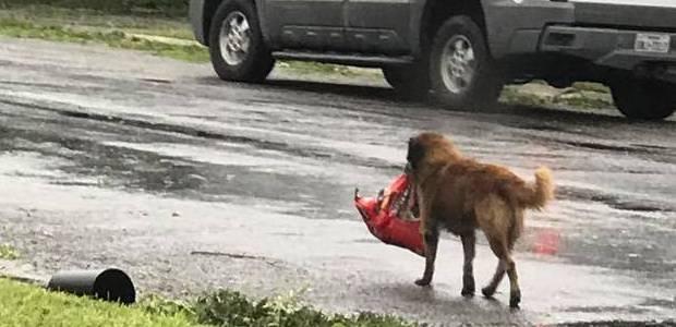 Cachorro carrega saco de ração nos EUA