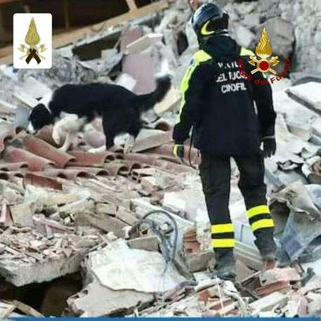 A cadela Camilla durante resgate