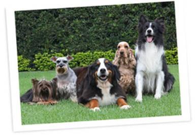 Animais da Turma da Bayer, que participa de apresentação de agility em SP