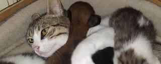 Gatinha Micas amamenta e salva o cãozinho Neko