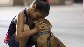Menina reencontra cachorro em abrigo; veja imagens da semana