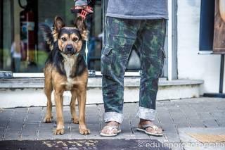Exposição Moradores de Rua e Seus Cães; veja agenda do fim de semana