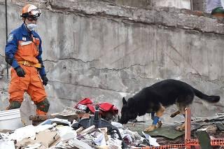 Cão durante buscas no México; relembre imagens da semana