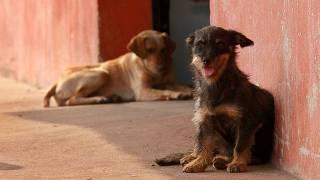 Cães em rua; São Paulo terá centro de castração na zona sul