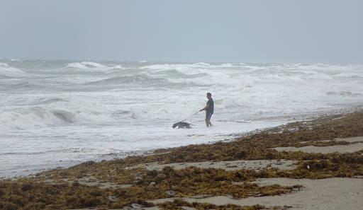 Damien Salvaggio e seu cachorro, Blue, andam na praia enquanto a Flórida se prepara para a chegada do furacão Irma