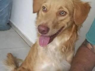 Max. o cachorro que perdeu a família em acidente