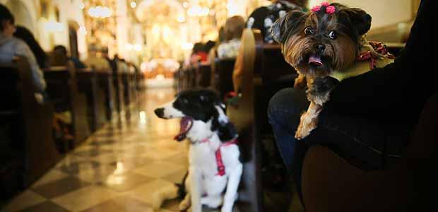 Cães em missa pelo Dia de São Francisco, protetor dos animais