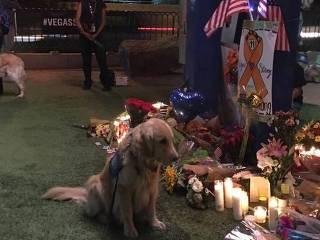 Cães terapeutas vão a Las Vegas após massacre em festival de música