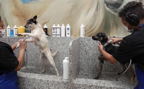 Cães da Codevida têm Dia da Beleza