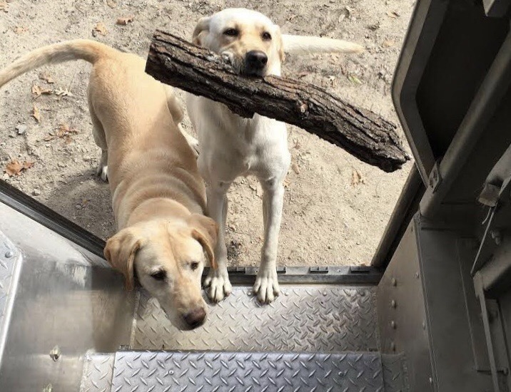 Entregadores compartilham fotos de cães que conhecem pelo caminho