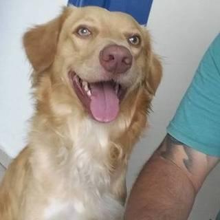 Max, cão que perdeu família em acidente