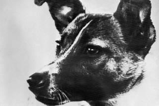 A cadela Laika