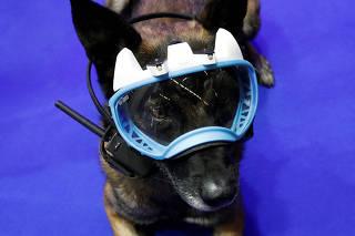 Cão policial durante exibição; veja imagens da semana