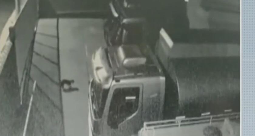 Câmera flagra cão sendo arremessado; na imagem, ele se levanta após a queda