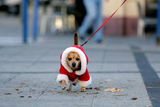Cão Noel, corrida na praia e brincadeira na neve; veja imagens da semana