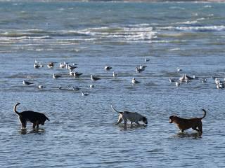 Cães e gaivotas se divertem em Istambul; veja imagens da semana