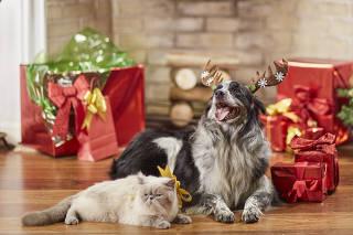 Pets modelos fazem fotos de Natal