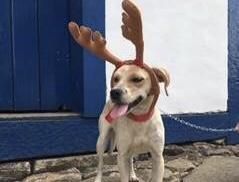 Shopping faz campanha Adote uma Rena para incentivar adoção de cães