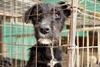 Cachorro em abrigo; abandono de animais aumenta nas festas e férias