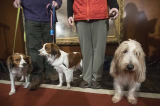 American Kennel Club reconhece duas raças de cães