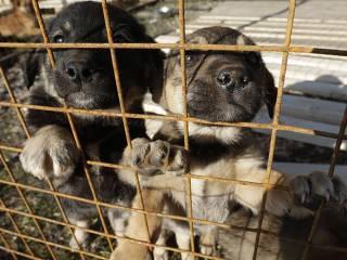 Cães em abrigo; Cães de rua são mortos em cidades da Copa, denunciam parlamentares russos