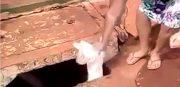 Bom pra Cachorro: Foi na hora da raiva, diz mulher que jogou cachorro em bueiro
