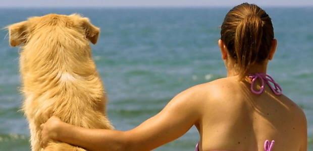 Cachorro na praia é proibido e pode dar multa em algumas cidades do país