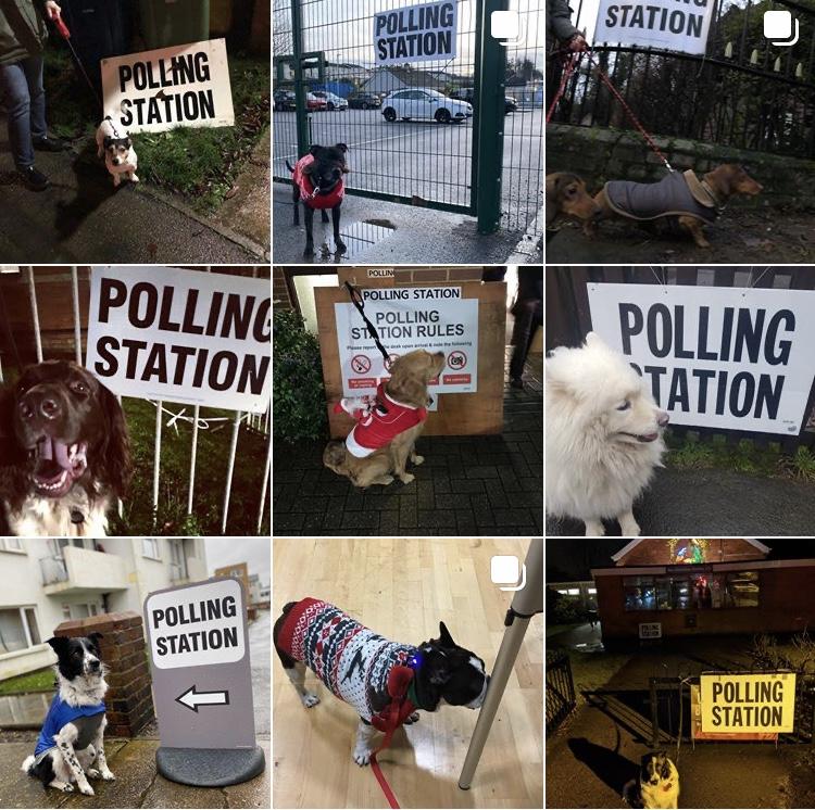 Imagens publicadas com a hashtag #dogsatpollingstations (Instagram)