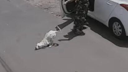 Imagem de câmera mostra Tintim sendo abandonado em rua (Imagem: Reprodução)