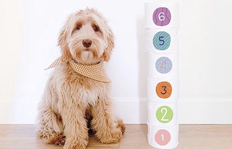 Em meio a isolamento por coronavírus, tutores fazem desafio do papel higiênico com cães
