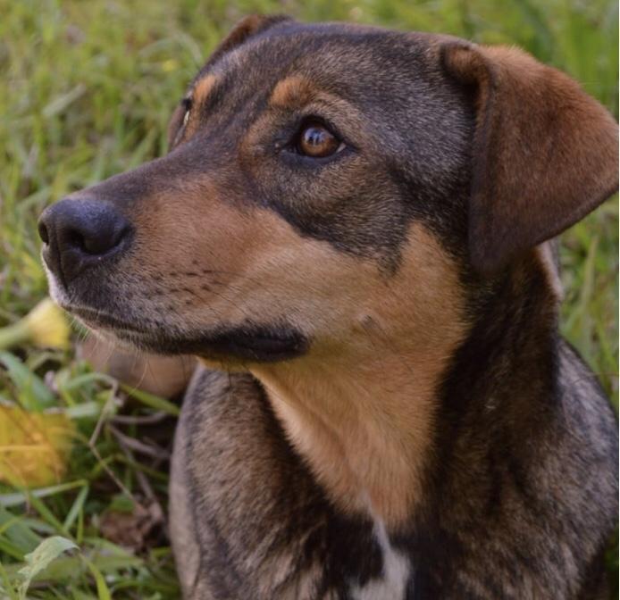 Notas pets: ração e adoção, triagem remota e hospedagem na quarentena