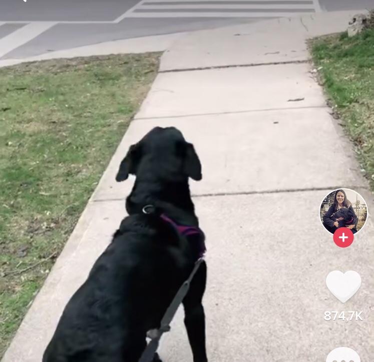 Samantha ao perceber o amigo do outro lado da rua; clique na imagem para ver o vídeo