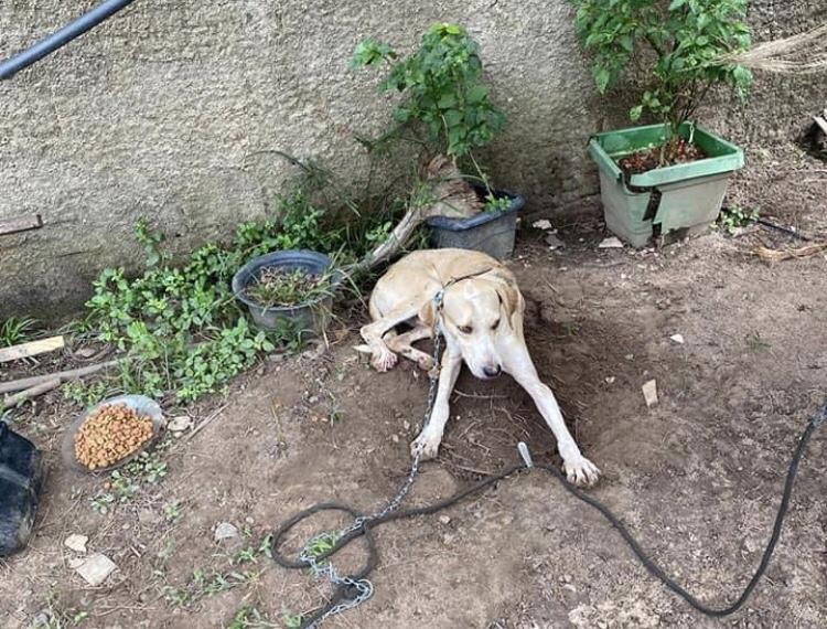 Homem arremessa cachorro por cima de muro, depõe e é liberado; animal é localizado