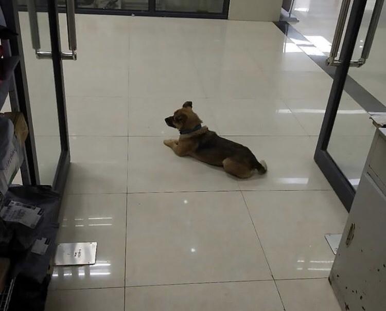 Cachorro passa 3 meses em hospital à espera do tutor, que morreu por Covid