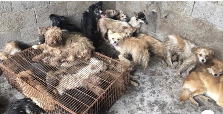 China retira cachorro de lista de animais criados para consumo, e protetores comemoram