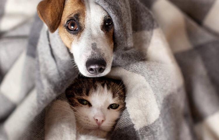 Pedágio Aumigo vai arrecadar ração e itens de inverno para ONGs de proteção animal