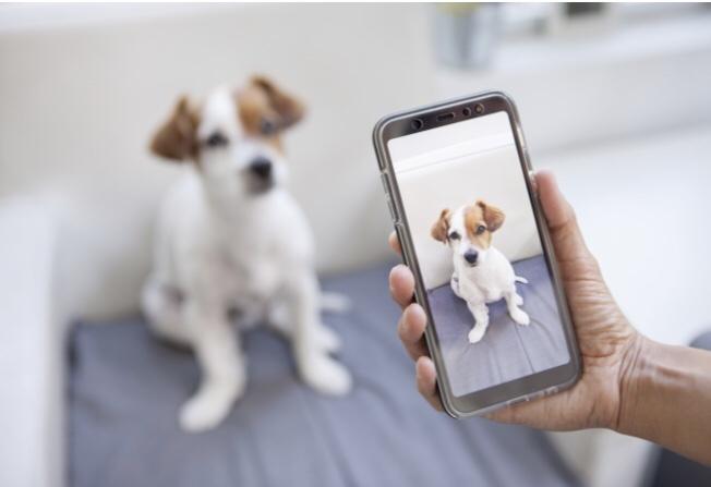 Saiba dicas para tirar a foto perfeita de seu cachorro
