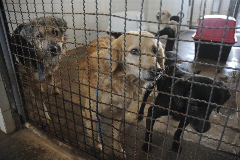Caso Zeus chama atenção para adoção de animais; Zoonoses do DF tem mais de 50 cães à espera de um lar