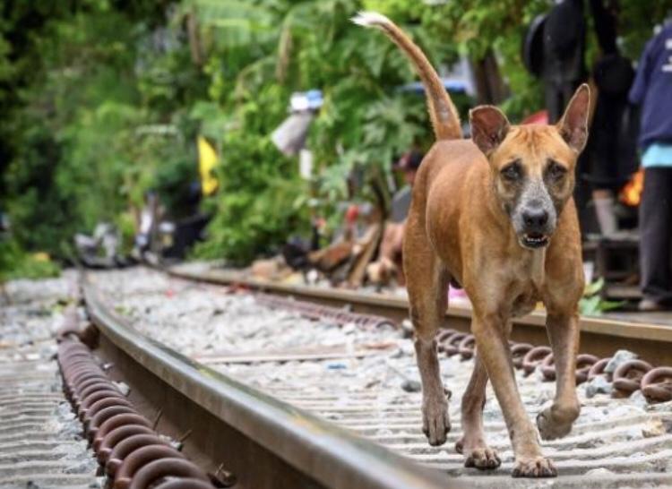 ONG premia Cidade Amiga dos Animais e discute manejo de cães e gatos de rua em webinar