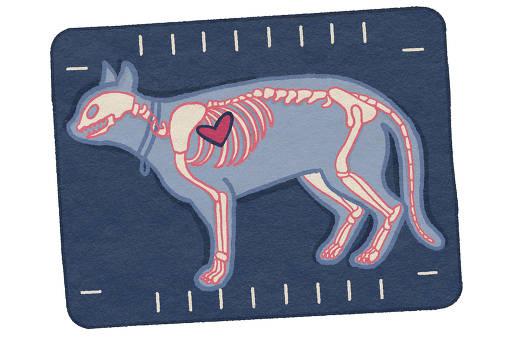 Cães e gatos também sofrem de problemas no coração (Catarina Pignato/Folhapress)